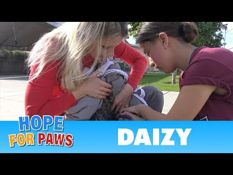 Once again, a Hope For Paws fan helps save a life!  SO COOL!!!  Please share.
