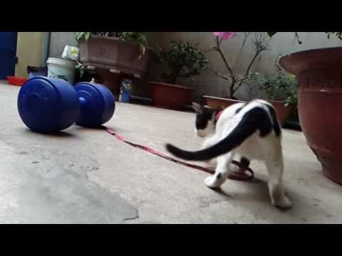 Movement and gait of a cat