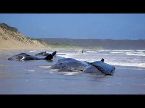 Sperm whale noise