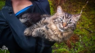 Cats Rescued From The Street Now Go Hiking And Camping