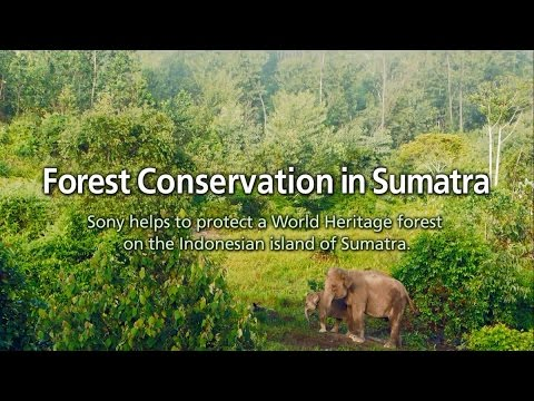 Project for Forest Conservation in Sumatra