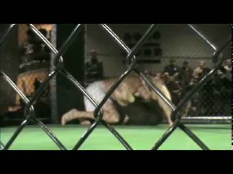 Don Sather MMA Fight In Regina
