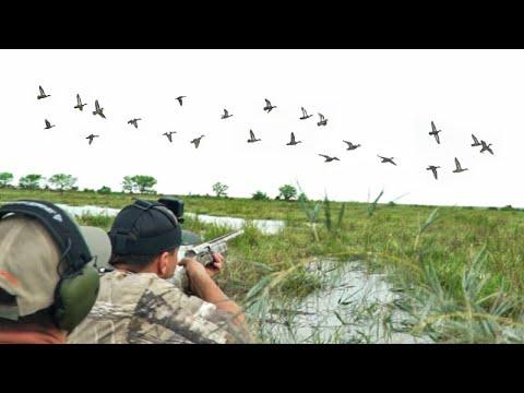 TEAL HUNT 4 Man Limits | 2021 Duck Hunting Teal Season