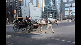 Хорошее отношение к лошадям. Как жара в Нью-Йорке сказывается на животных