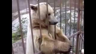 Умный медведь Тимофей стесняется)) Очень милое видео!)