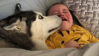 Husky Does Everything She Can To Stop My Baby Crying!!... [TRY NOT TO SMILE]