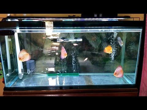 Unduh 4500 Gambar Ikan Polos Terpopuler
