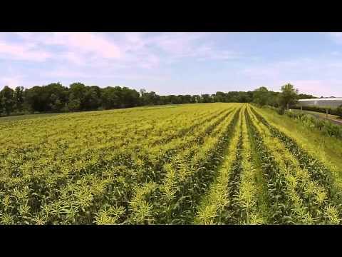Harbes Farm Corn Planting