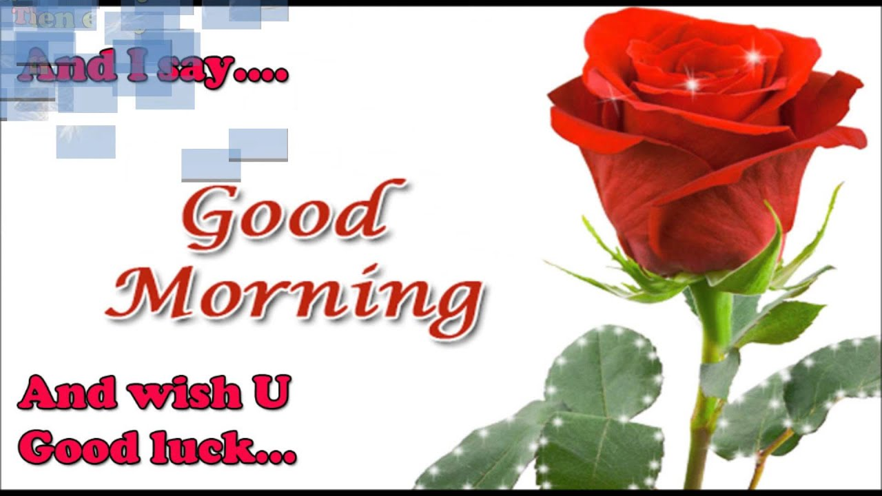 Beautiful Good Morning Video Message For Whatsapp Facebook