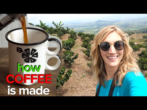 How Coffee Is Made - Coffee Growing 101 - In Colombia!