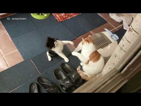 Cat Fight : 4K Ultra Hd 2160p Video