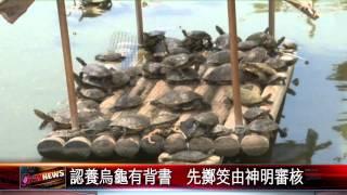 20150528 啟明堂烏龜爆滿  開放民眾認養