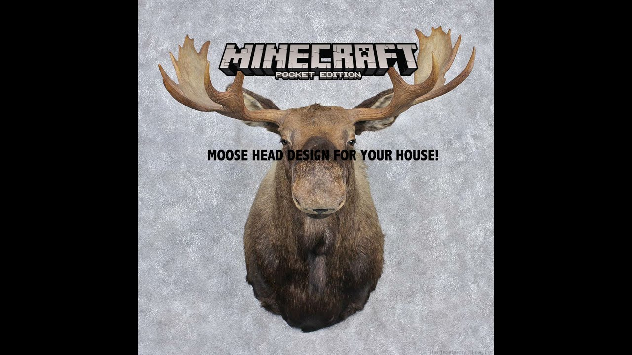 Super Minecraft PE I How to make a moose head on your wall! - YouTube MR85