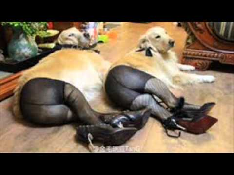 BEAUTIFUL ALL KINDS OF DOGS - YouTube
