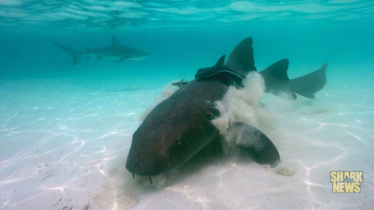 Alligator Enemy | Shark Week 2018