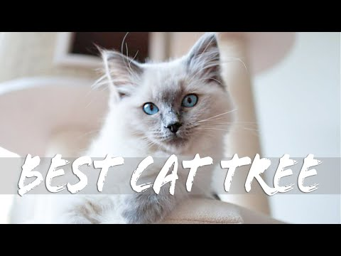 Best Cat TREE for large cat breeds? COTEC review with Ragdolls