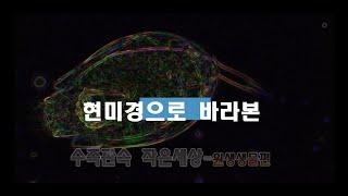 현미경으로 바라본 세상-2편_수족관속 원생생물