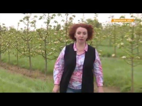 Видео новости   В Винницкой области вымирающее село спас ягодный бизнес   «Факты»