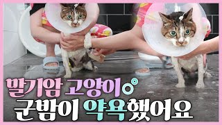 말기암 투병중인 고양이 군밤이 약용목욕하기