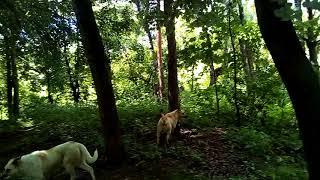 Бродячая Стая Собак