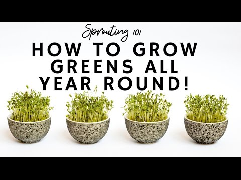 How to Grow Greens ALL Year-Round! (Sprouting Course)