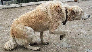 Wenn dein Hund das tut, bedeutet das, dass er im Sterben liegt!