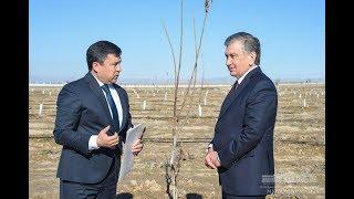 Президент Шавкат Мирзиёев Қашқадарё вилоятида. 1-қисм