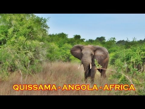 Safari in Quissama Natural Park - Angola, Africa - 100 km fr