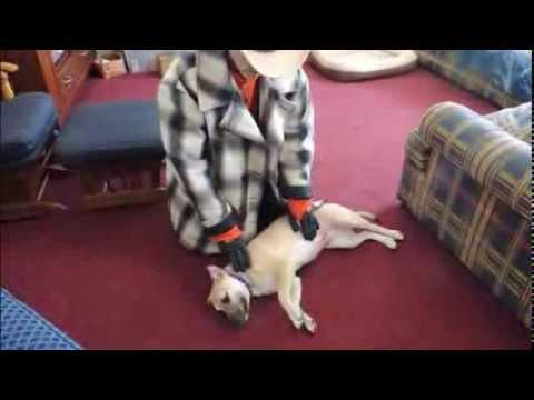 Side Submitting Dogs Correctly - Dog Whispering BIG CHUCK MCBRIDE - DOG INTERVENTION