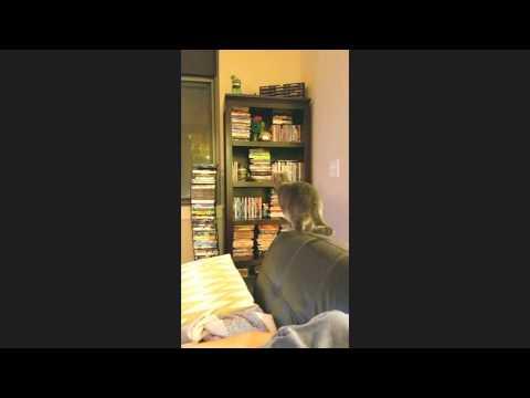 Cat smashes into shelf