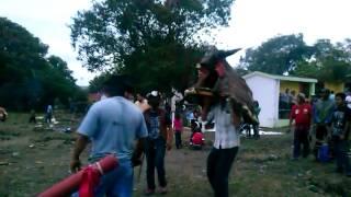 """Ochavario Zacamixtle 2013 """"El toro"""""""