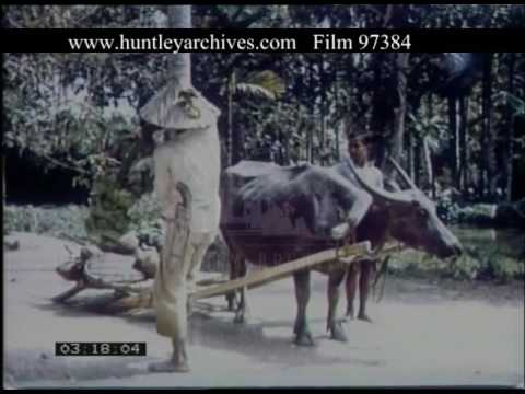 South East Asia Ports Agriculture & Shopping, 1960s - Film 97384