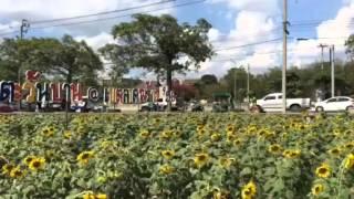 バンコク・ラップラオのひまわり畑