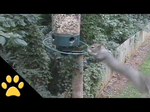Squirrels Spinning on Bird Feeders: Compilation