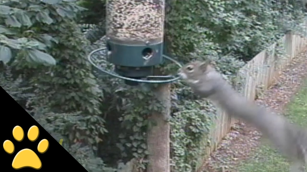 keeping squirrels keep proof blog bird s farm off your blain feeder feeders squirrel fleet