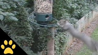 Squirrels Spinning On Bird Feeders: Compilation