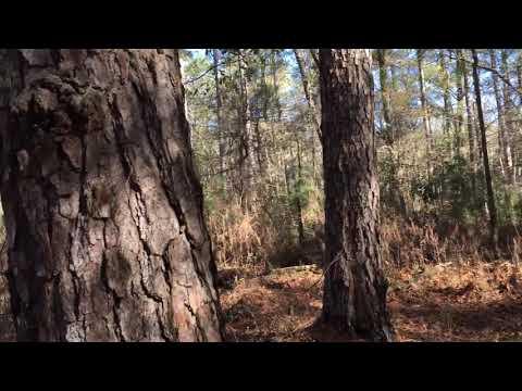 Sam Houston National Forest - December 28, 2018