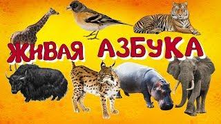 Живая азбука. Животные для детей.Учим буквы. Развивающие мультики.