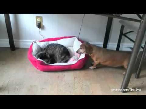Cat stealing dogs beds - Gatti che rubano le cucce ai cani