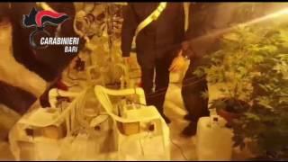 Garage trasformato in serra di marijuana, arrestati marito e moglie