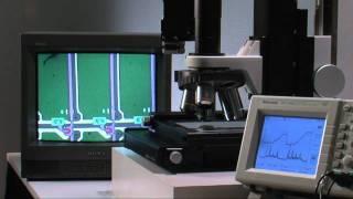 AutoFocus Microscope(English) CHUO PRECISION INDUSTRIAL CO.,LTD.