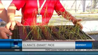 Climate-Smart Rice