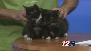 Rescue a Pet: Colonel Mustard and Mr. Green