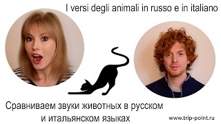 """Как """"разговаривают"""" животные в русском и итальянском языках?"""