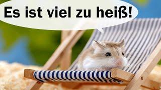 Hamster und Hitze (Kühltipps und Co.)
