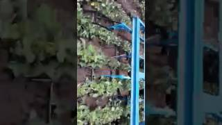 पटेल कृषि यंत्र बदनावर