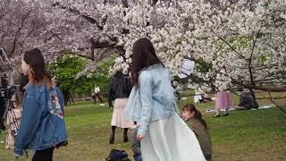 風が冷たい 代々木公園で桜を愛でる 2020/3/23 19.