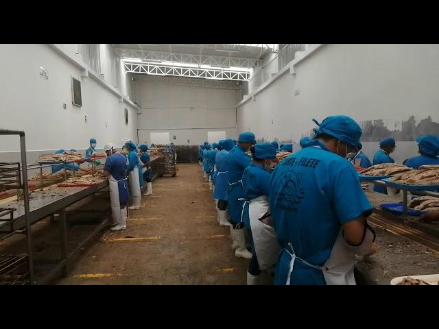 Perú: Productoras de conservas de pescado cerrarán dejando a más de 30 mil chimbotanos sin trabajo