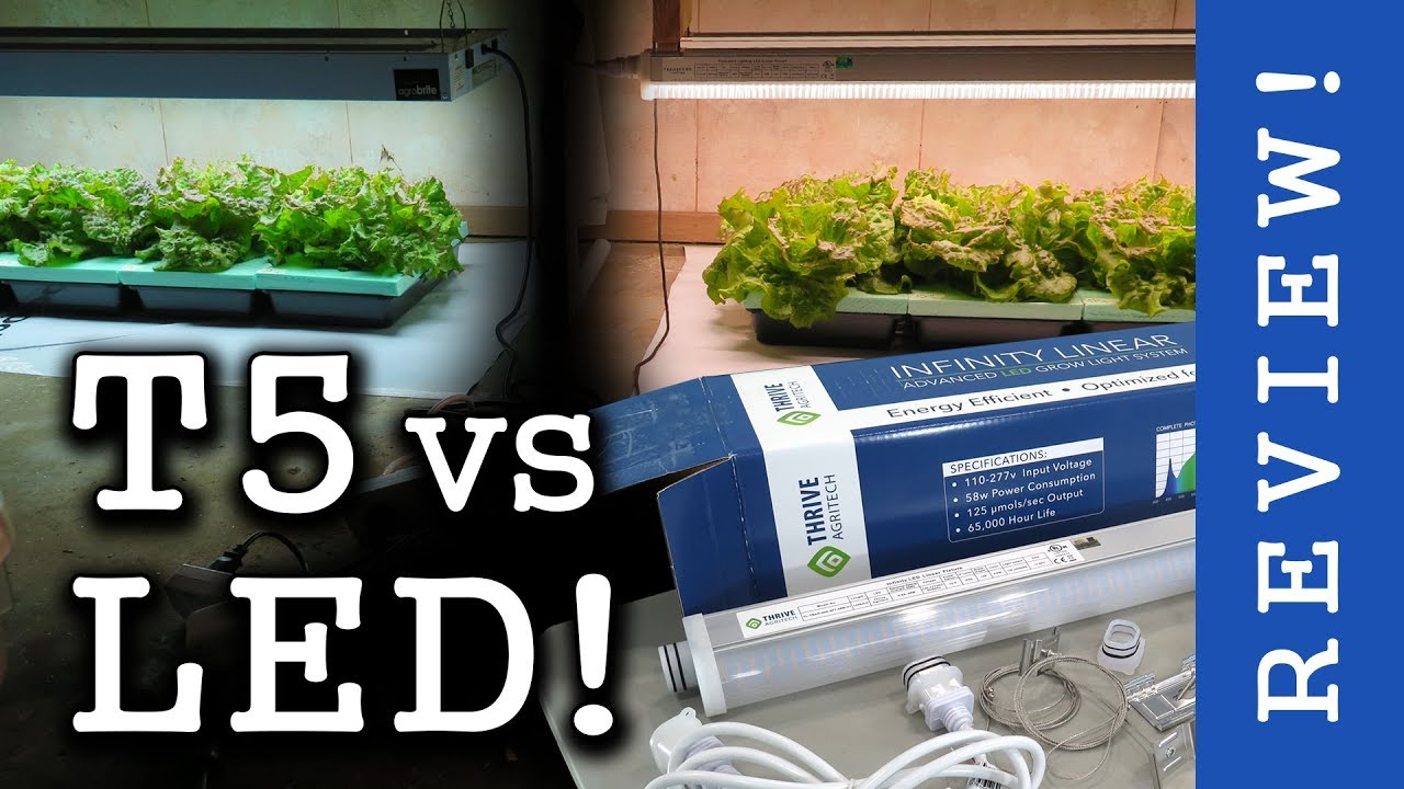 High End Leds Vs T5 Fluorescent Thrive Agritech Infinity Linear Review Lettuce Test
