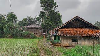 Download Ketika Hujan Turun, Inilah Suasana Pedesaan Yang Di Nanti | Jawa Barat - Cianjur Selatan - Cikadu